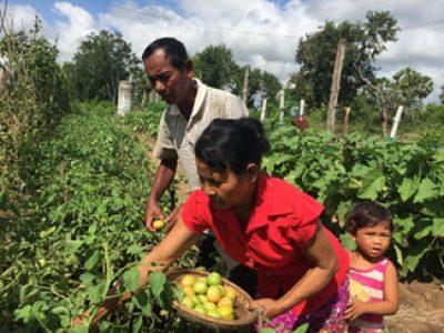 A model farmer in Kampong Speu province