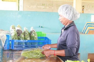 Growing chemical-free lettuces on 500 m2 allows Ms. Sok Sier to earn a decent living