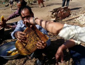 Xieng Khuang beekeepers savour sweet taste of success