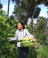 Duch Ses Farm