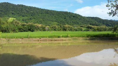 Lee 7 farm