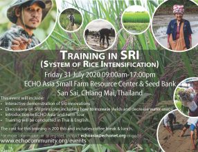 Training in System of Rice Intensification (SRI), July 31, 2020, Thailand