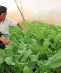 Nethouse helps a vegetable producer stop using chemical pesticide