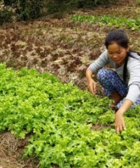 A passionate farmer to organically grow vegetable