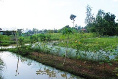 Vegetable garden, surrounded by water channel; poultry pen is seen in the background