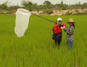 Making a Case for Safer Ways to Fight Rice Pests in the Greater Mekong