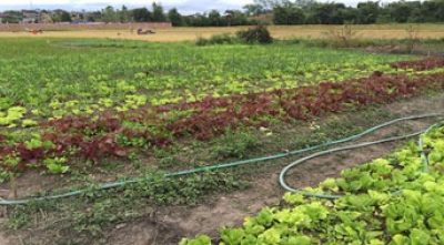 Sustainable Agriculture Market Access Development Project – SAMADP (1)