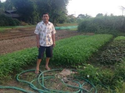 Vientiane Organic Vegetable Producer Group (1)